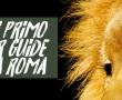 Guide Safari a ROMA