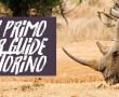 Guide Safari a TORINO